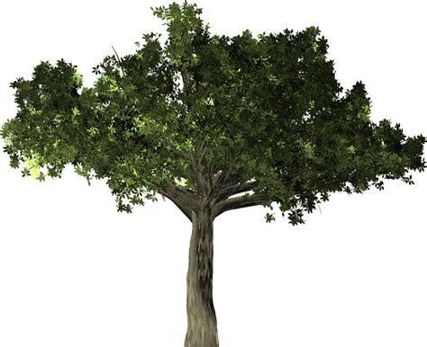 Tree Plant - free illustration ficus tree plant isolated free