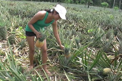 cadenas productivas sustentables regionales gobierno de ucayali orienta diez millones de nuevos soles