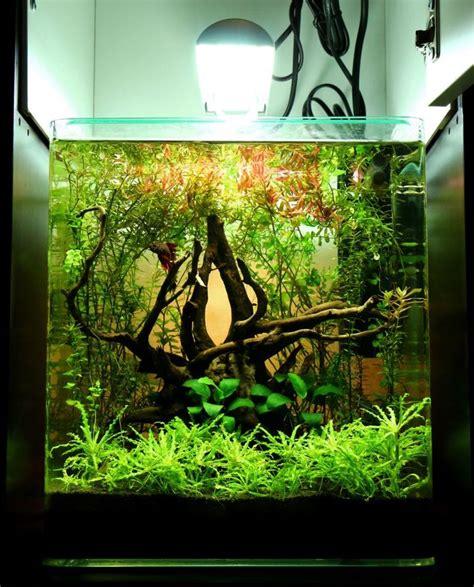 aquascape driftwood 17 best ideas about driftwood for aquarium on pinterest