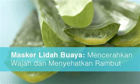 Aloe Vera Gel Untuk Masker Wajah masker lidah buaya untuk kulit jual bioaqua masker wajah