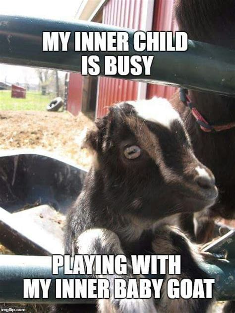 Goat Memes - 820 best gotta love goats and sheeps images on pinterest
