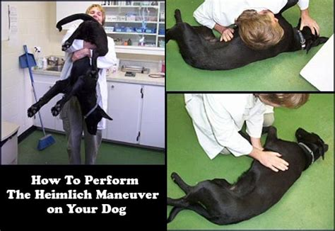 heimlich maneuver for dogs how to perform the heimlich maneuver and cpr on your