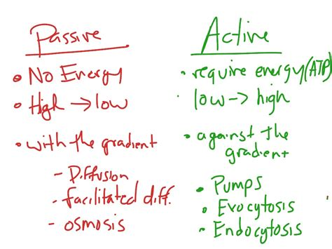 passive and active transport venn diagram showme passive transport of cells