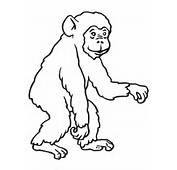 Chimp Coloring Page  SuperColoringcom
