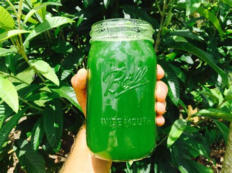 hydration juice the best green juice for hydration regenerateyourlife org