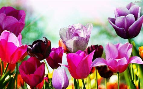 wallpaper free spring free spring backgrounds desktop wallpaper cave