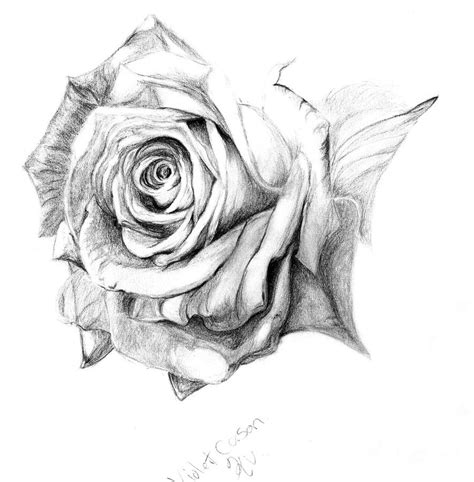 pencil drawings charcoal drawings and art galleries rose pencil rose wip by ladykylin on deviantart