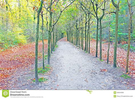 fall in the forest in netherlands stock photo image