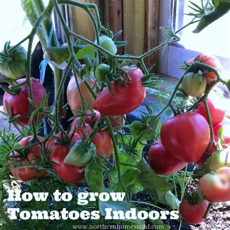 reasons  grow  aeroponic tower garden northern