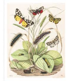 instant wall art botanical instant wall art butterfly botanical prints book by adams media official publisher page