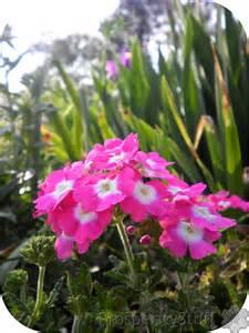 prosperitystuff quilts pink perennials