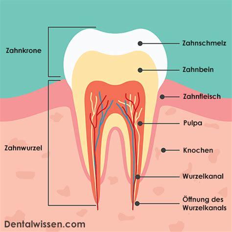 Beschriftung Zahn by Zahn Abgebrochen Was Tun Dentalwissen