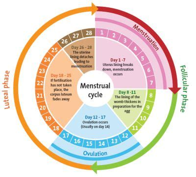 Menses As Detox by Is The Master Cleanse Safe For Who Are Menstruating