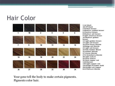 gene expression nlsy blogging eye and hair color of americans genetics unit of genetics of hair color dagpress com
