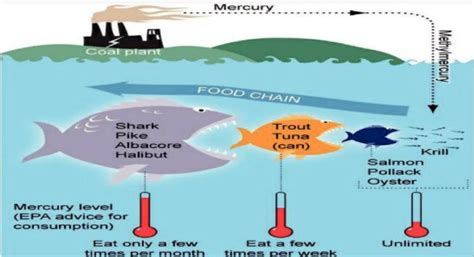 Does Fish Detox The by Inorganic Vs Organic Mercury And What To Do About It
