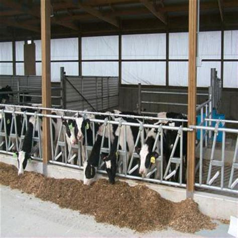 calf housing design calf house design 28 images ideal types of cattle shed for housing about pet