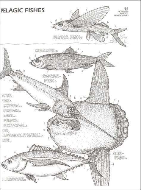marine biology coloring book 032462 images rainbow