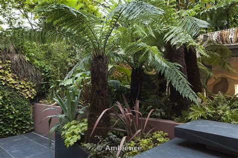 tree ferns side verge pinterest