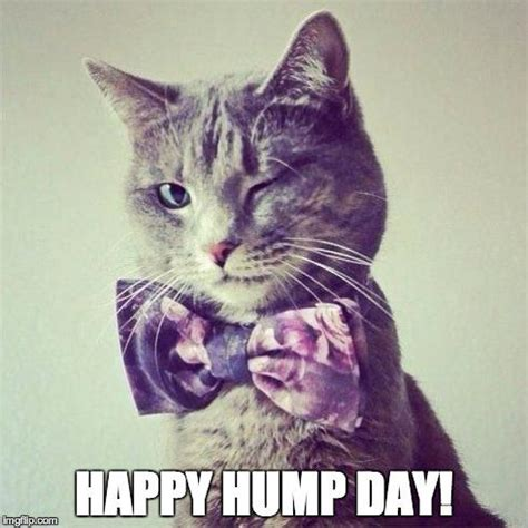 Sexy Cat Memes - hump day cat blank template imgflip