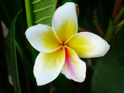 khoobsurat wallpaper flower darr ke aage jasmeet hai flowers new on 05 12 10