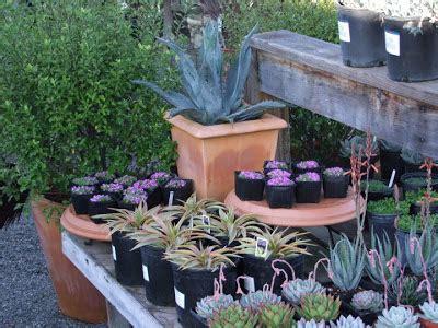 cottage garden nursery petaluma paradis express cottage gardens of petaluma valley