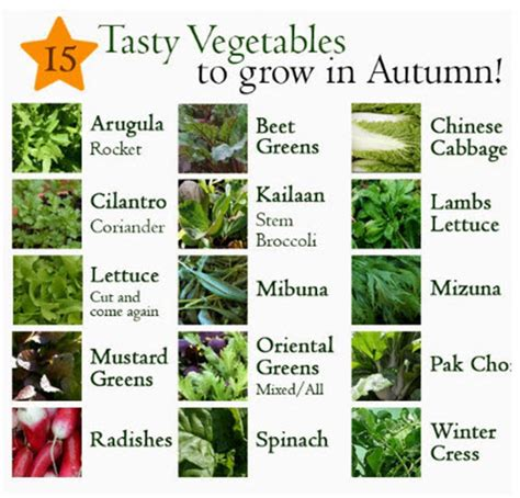 15 best vegetables that grow in a container or pot