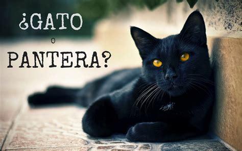 minicuentos de gatos y 191 por qu 233 odiamos a los gatos negros congdegato