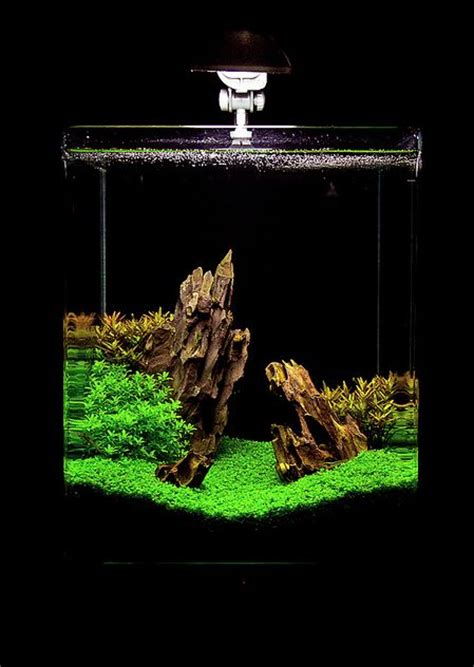 setting aquascape 694 best planted nano tanks images on pinterest