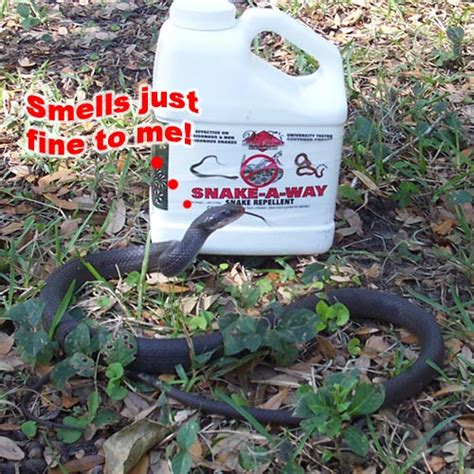 Garden Snake Deterrent How To Keep Away Snakes Because I M Terrified Of Them