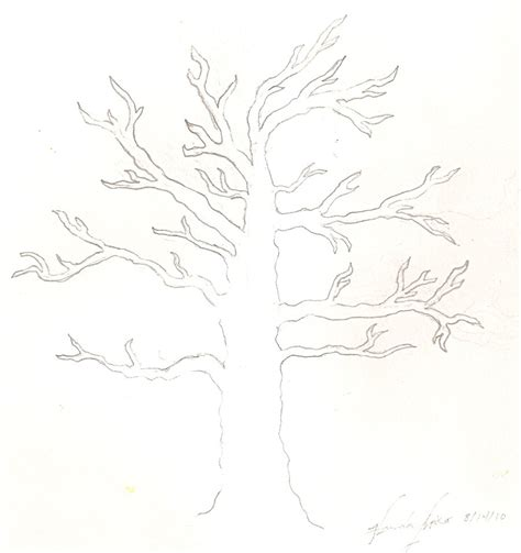 Tree Outline With Leaves by Tree Outline No Leaves Images
