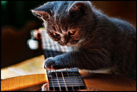 who plays cat cat plays slide guitar happy blue s monday