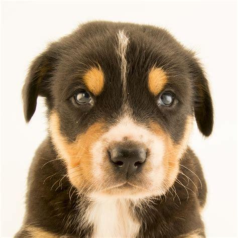 dog national geographic