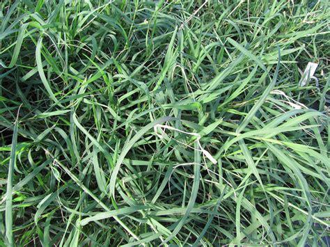 Types Of Grass by 5 Popular Grass Types In Nashville Tn Lawnstarter