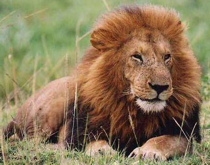 Taring Gajah 3 dunia sains tahun 1 perlindungan haiwan daripada bahaya