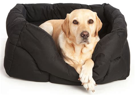 dog on bed pets and leisure dog and cat beds mattresses cushions