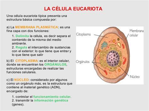 estructura de la clula eucariota 4 186 eso la celula