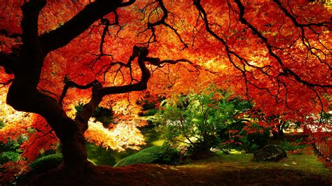 Best 150 Beautiful Nature Wallpapers in HD(High Definition) Fall Nature Wallpaper