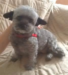 Small Dogs Needing A Home Shelter Dogs Needing Homes Eloise S