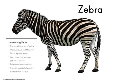 Printable Zebra Facts | zebra picture with fact box