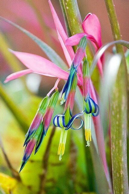 Pupuk Untuk Bunga Tulip galeri bunga bunga indah dan cantik tips dan inspirasi