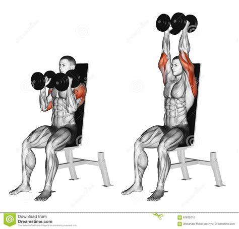 bench press prices bench press prices exercising dumbbell seated shoulder