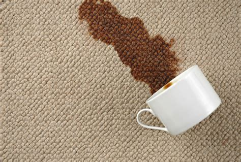 coffee stain on rug carpet cleaning tips remove top stains on carpet