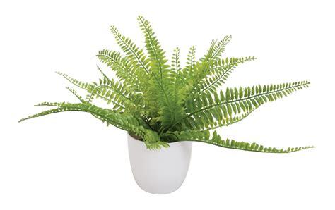 pflanze große blätter dekotopf rom living silberfarben preis bild rating