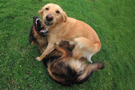how to your to like other dogs 5 ways treating your like a human can backfire mnn nature network