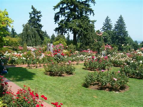 international rose test garden 7 sights to see in