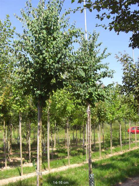 kleiner baum für garten s 195 164 ulenobst 226 ersatzpflanzung 226 ausgleichspflanzung 226
