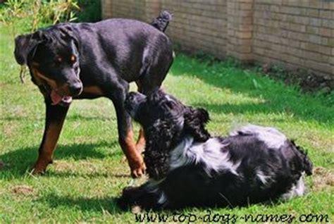 badass puppy names badass rottweiler names