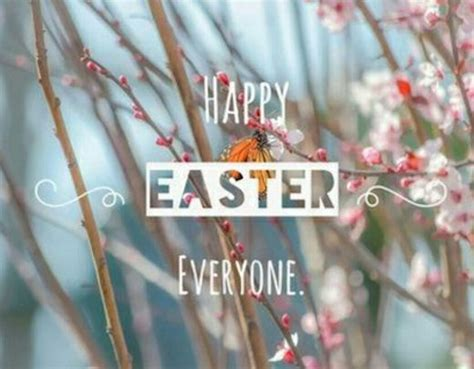 Happy Easter Everyone by Happy Easter Everyone Pictures Photos And Images For