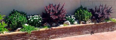 venta de plantas para jardin comprar plantas para jard 237 n en augusta jard 237 n