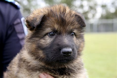 mutt puppy queenslanders to name seven puppies squad